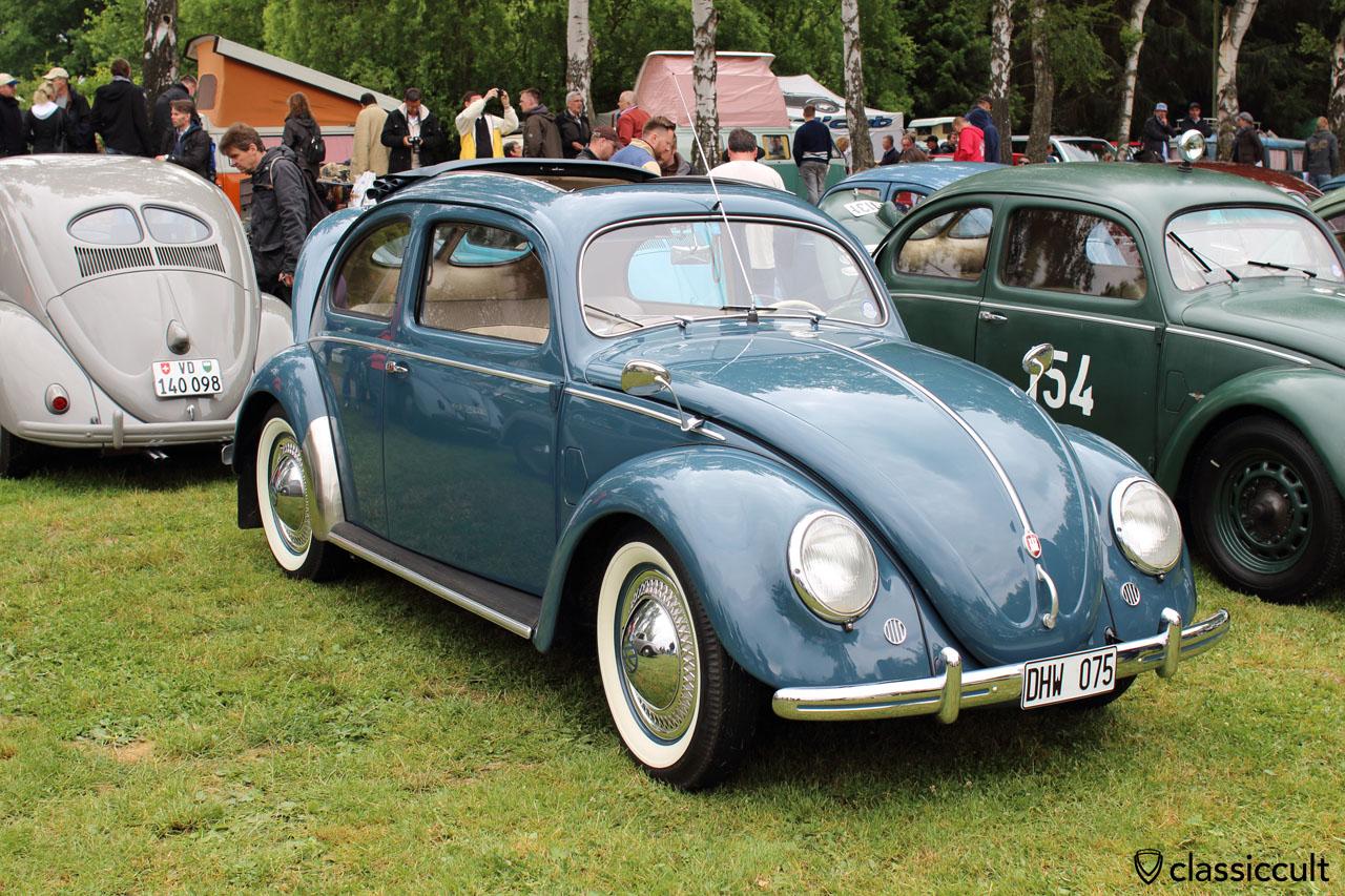 superb Split Window Beetle, front view