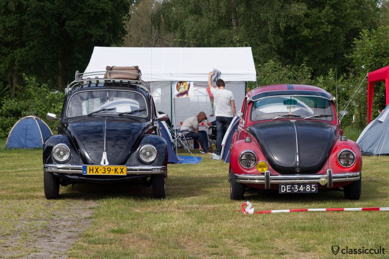 two classic Beetles