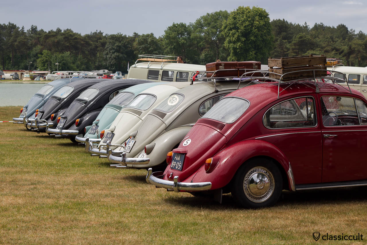 Line Up of Volkswagen Beetles, IKW Wanroij 2013