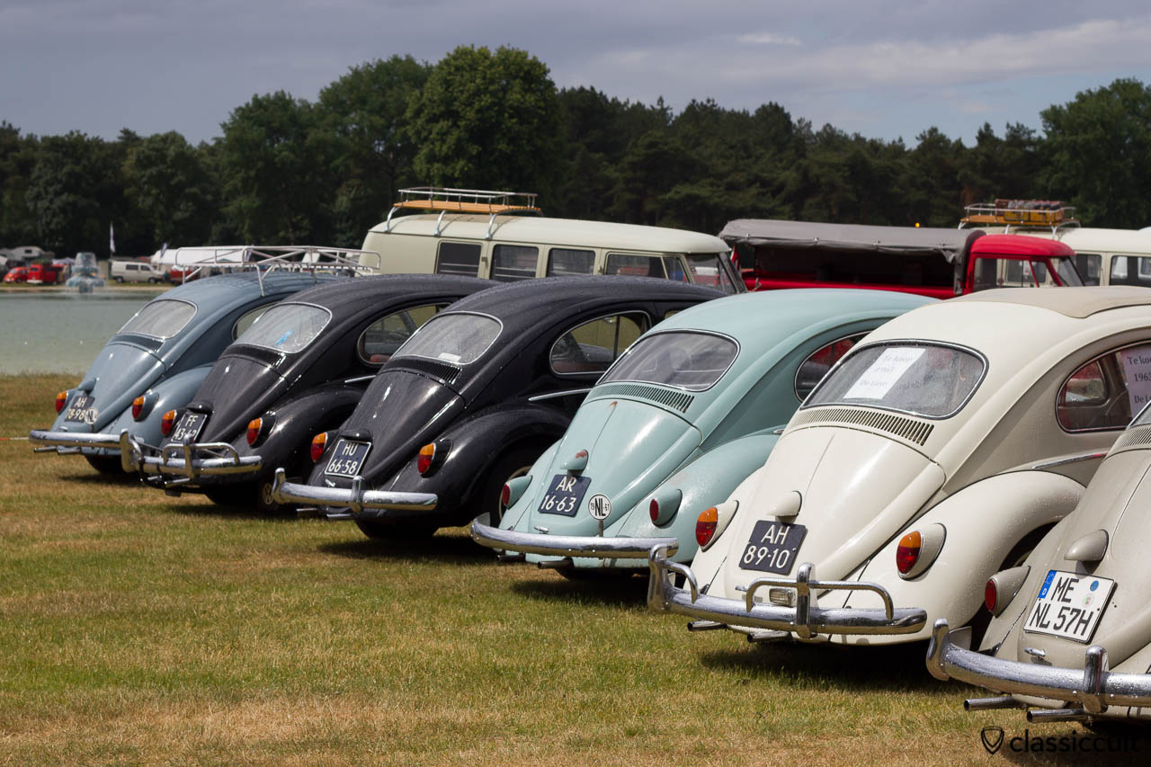 Line Up of VW Bugs, backside