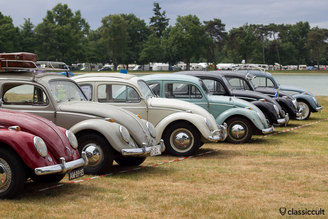 Line Up of VW Bugs, frontside
