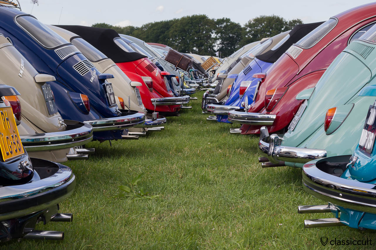 rear side view of many classic Volkswagen Beetles, IKW Wanroij 2013