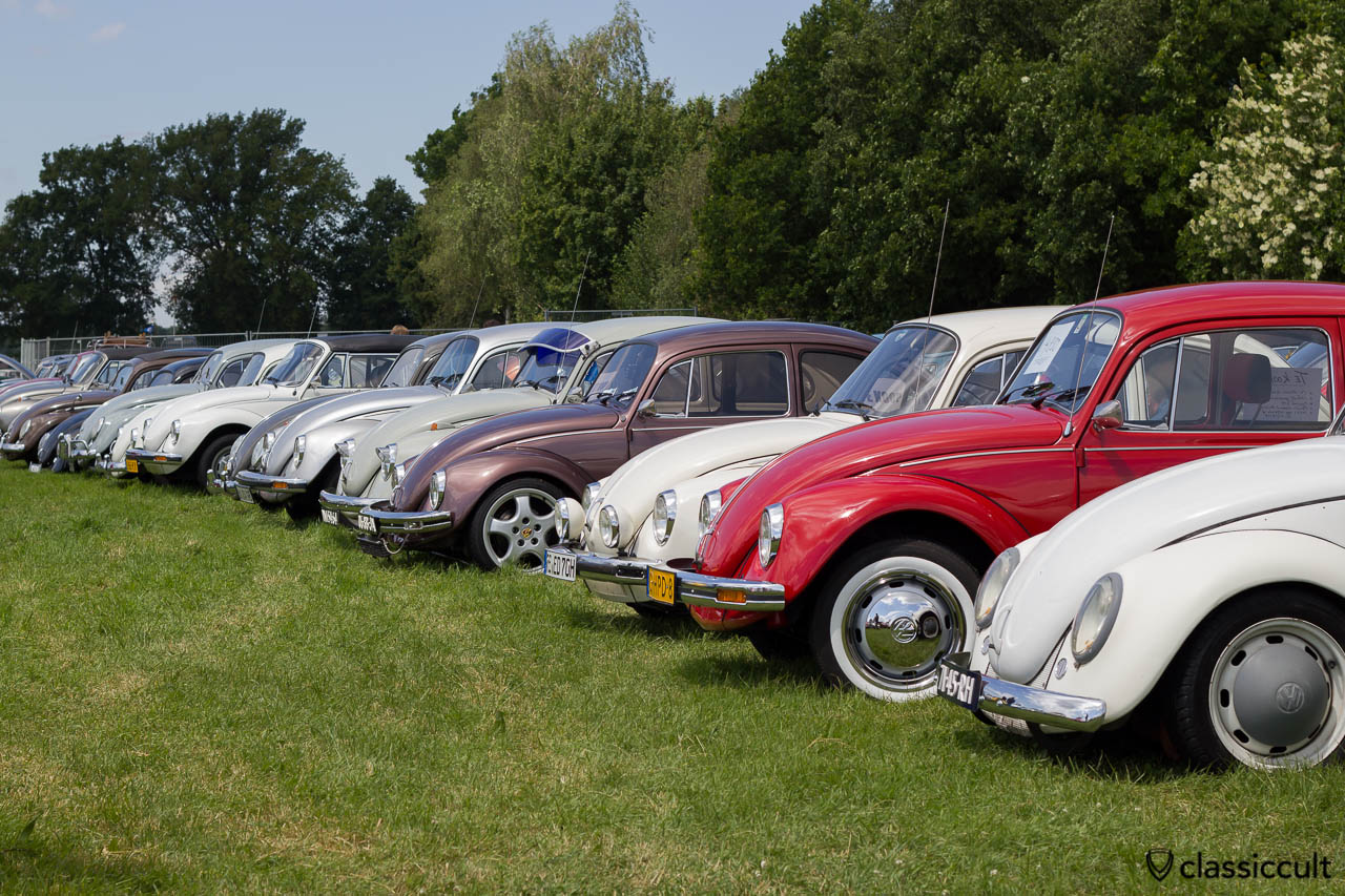 Beetles parking at IKW VW meeting Wanroij 2013