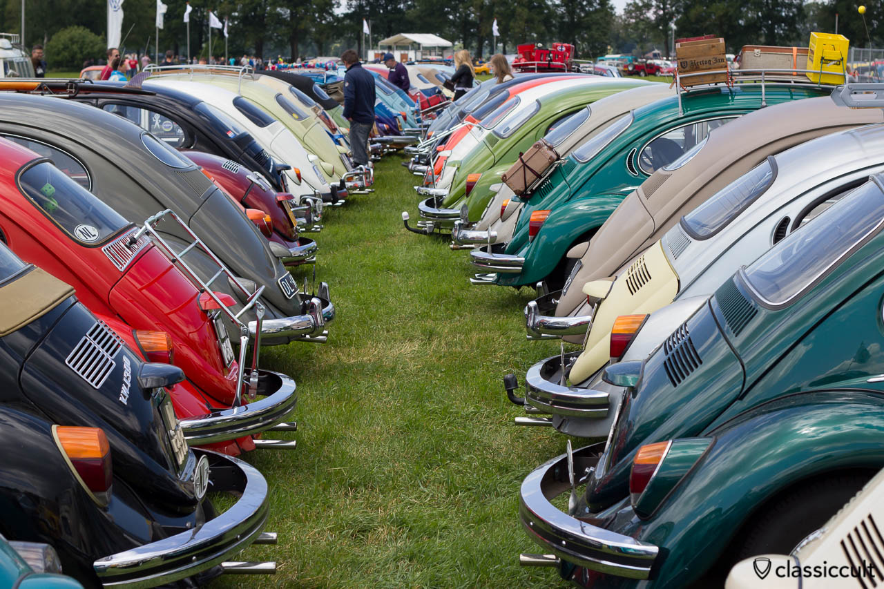 many VW Beetles rear side