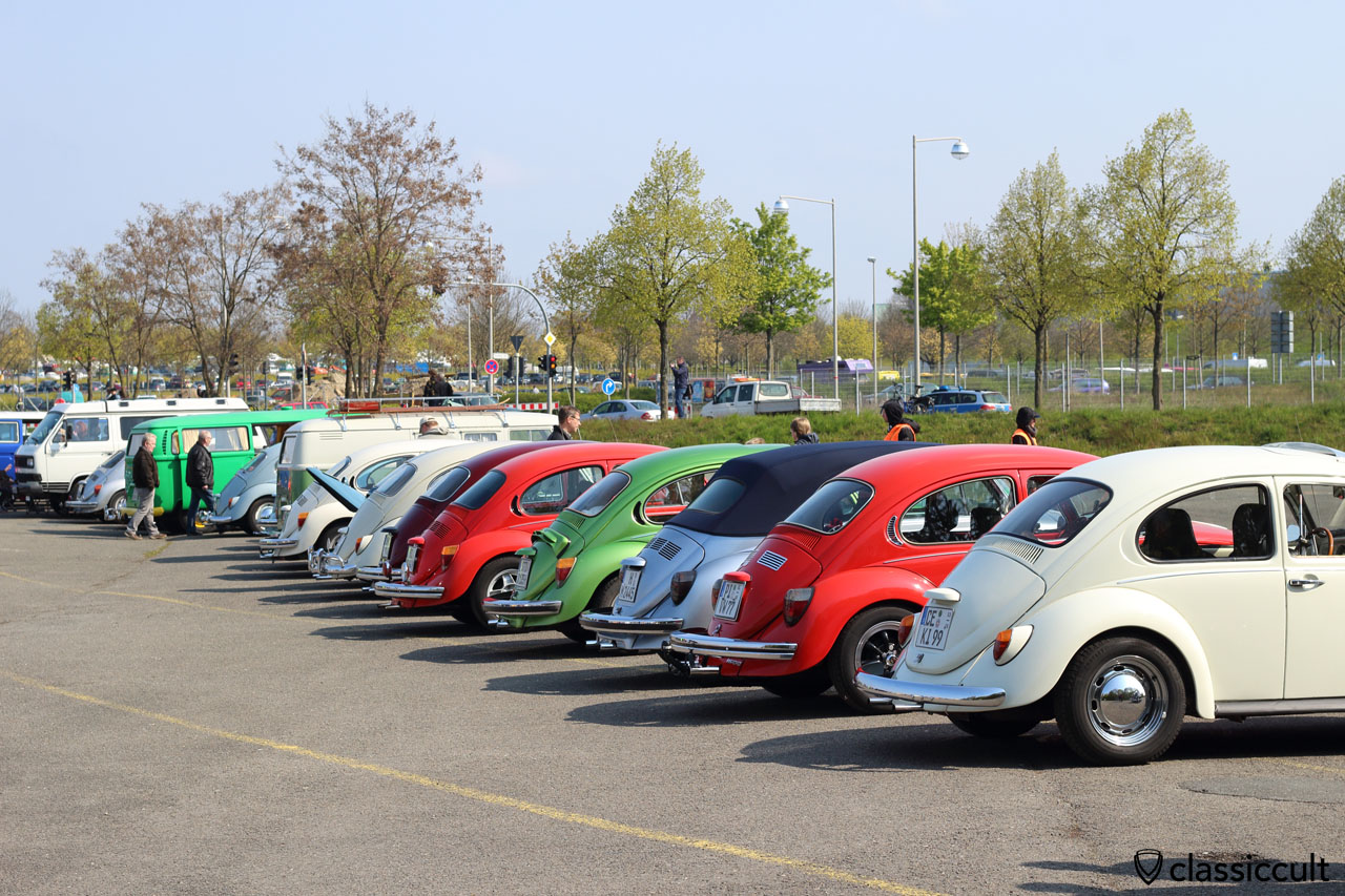 row of vintage Volkswagen Beetles, rear view