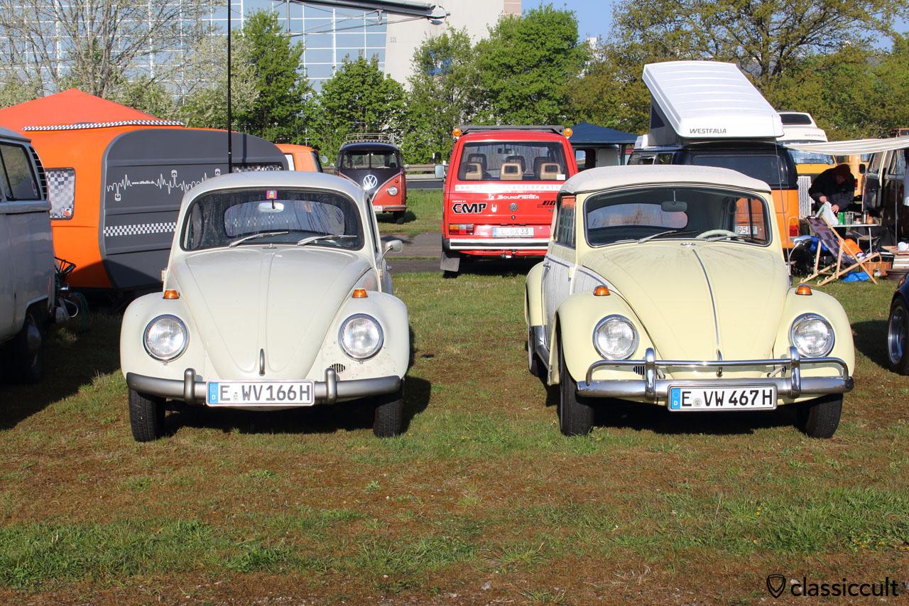 links ein VW Käfer 1200A Standard von 1966 mit lackierten Stoßstangen und rechts ein VW Käfer Cabrio 1967
