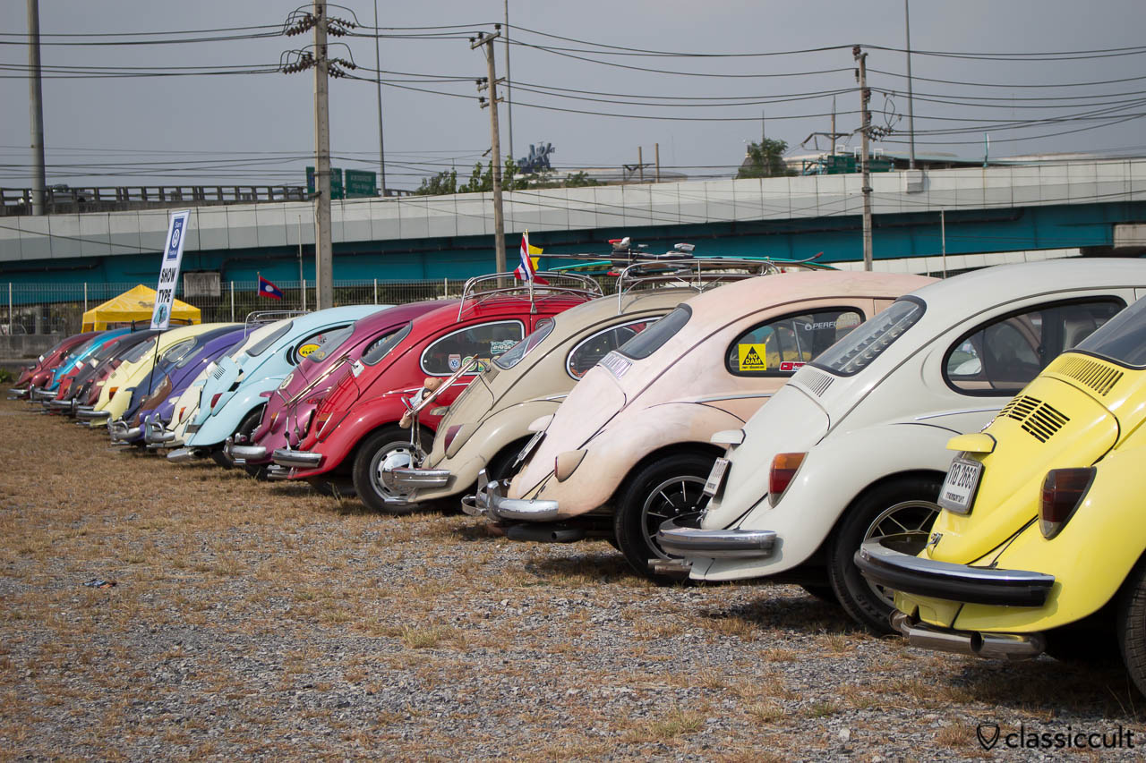 Beetles rear line up at Siam VW Show
