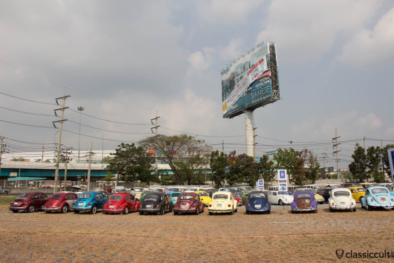 VW Beetles at Siam VW Show