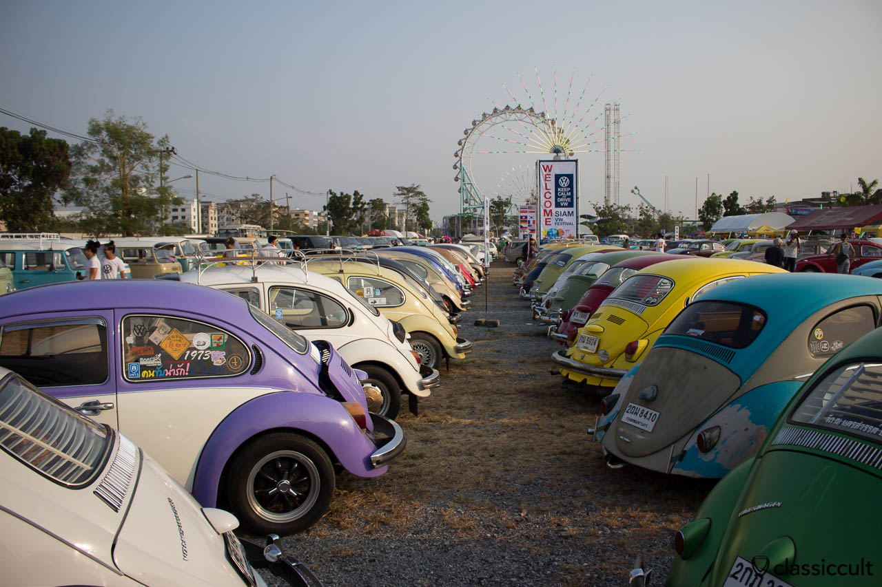 Beetles rear, Siam Show Thailand