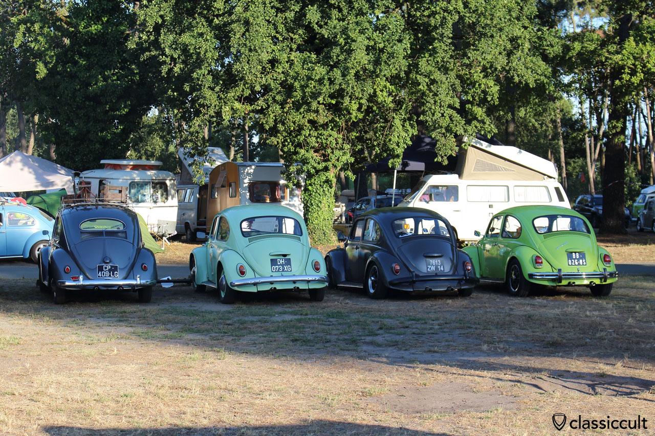 VW Beetles rear view