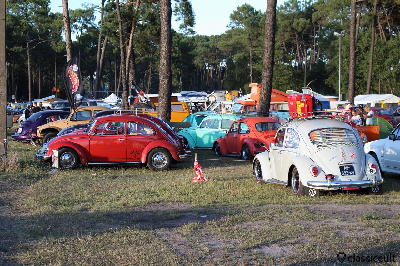 VW Beetles at campground